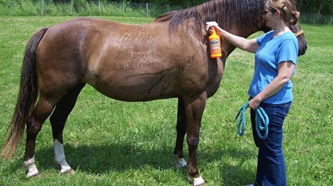 Rovarriasztó készítmény permetezése a ló testére