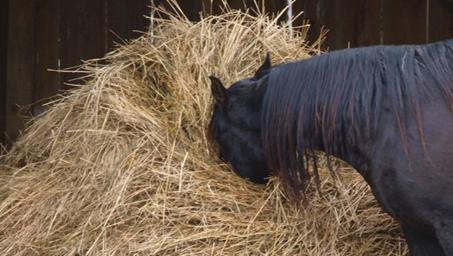 Széna, szalma lovaknak