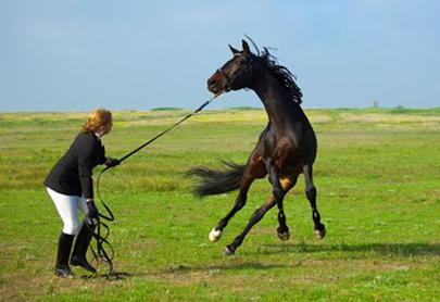 Viselkedészavaros ló idomítás